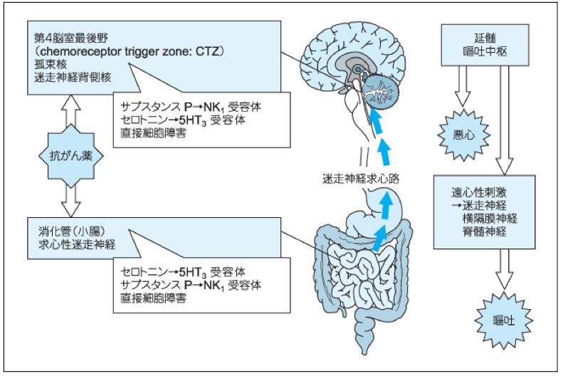 抗がん剤吐き気機序